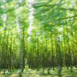 Driving by the green forest in motion blur — Photo