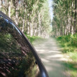 Speed driving on dirt road through the forest — Stock Photo