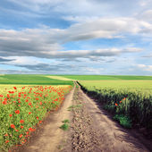 Dirt country road through cultivated field — Stock Photo