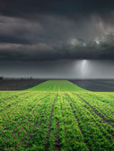 Young wheat crop in field against large storm — Stock Photo