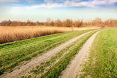 Path to the area for bird watching — Stockfoto