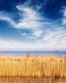 озеро с тростника в солнечный день — Стоковое фото