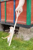 Junge kätzchen versucht die mahlzeit zu bekommen — Stockfoto