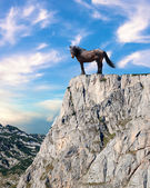 Proud stallion standing on top of a cliff — Stock Photo