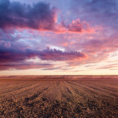 Cultivated land and cloud formations at sunset — Stock Photo
