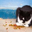 Homeless cat  — Stock Photo