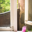 Flower on windowsill — Stock Photo #30979501
