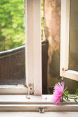 Flores en el alféizar de la ventana — Foto de Stock