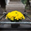 Fresh flowers on grave. Cimitero Monumentale, Milan — Stock Photo