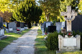 Beautiful alley at cemetery — Stock Photo