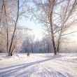 Beautiful winter scenery with white trees and dog — Stock Photo