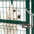 Young dog behind metal fence. — Stock Photo