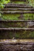 Wet stone stairs — Stock Photo