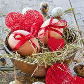 Various raw eggs — Stock Photo