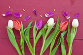 Colorful tulips for easter — Stock Photo
