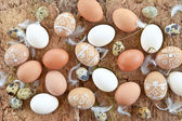 Background with a variety of eggs — Stockfoto