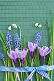 świeże wiosenne kwiaty — Zdjęcie stockowe