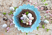 Little easter nest with quail eggs — Stock Photo