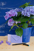 Blue hydrangea in vintage pot — Stock Photo