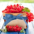 Basket with fresh red currants — Stock Photo #49735095