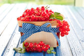 Basket with fresh red currants — Stock Photo