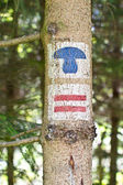Tree trunk with hiking signs — Stock Photo