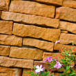 Old Brick wall and flower — Stock Photo