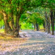Tree tunnel path  — Stock Photo