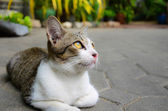 A cute little kitten looking at the sky — 图库照片