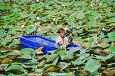 Een man is stucking in het midden van lotus vijver — Stockfoto