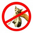 Unwated cat or no cat bullying sign — Stock Photo