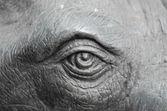 Elefante olho closeup — Fotografia Stock