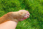 Human and a dog holding hands. A cute friendship concept. — Stock Photo