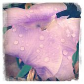 Sweet lilac — Stock Photo