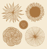 Vintage vector flowers set. Linear floral elements — Stock Vector