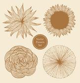 Vintage vector flowers set. Linear floral elements — Stock Vector