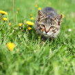 Kitty lurking in grass — Stock Photo #26158535