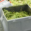 Container of lawnmower full of grass. — Photo