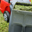 Container of lawn mower full of grass — Stock Photo