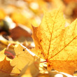 Closeup of fallen autumn leaves. — Stock Photo