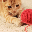 Stock Photo: Little cat playing with wool on carpet.