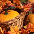 Pumpkins in basket — Stockfoto