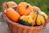 Pumpkins in basket in the garden — Stock Photo