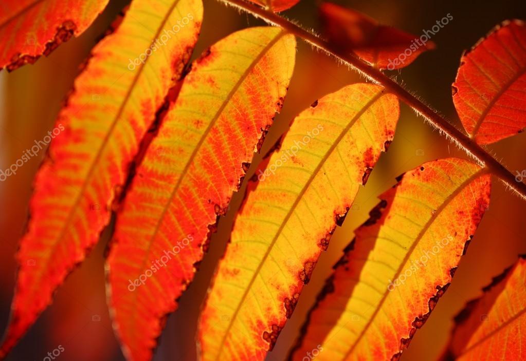 秋天的叶子的特写