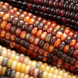 Indian corn close-up — Stock Photo