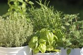 Close-up of thyme, basil, rosemary, mint and oregano — Stock Photo