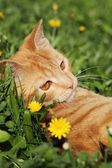 Young cat resting in the grass — Stock Photo