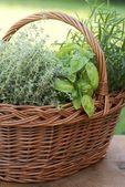 Kosz z tymianku, bazylii i rozmarynu w ogrodzie — Zdjęcie stockowe