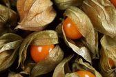 Zbliżenie: pęcherzyca owoców — Zdjęcie stockowe