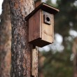 Tree with new wooden house for birds. — Stock Photo